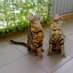 1CH.Nina i Bianka